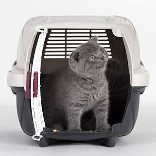 Pet Movers - World Moving and Storage